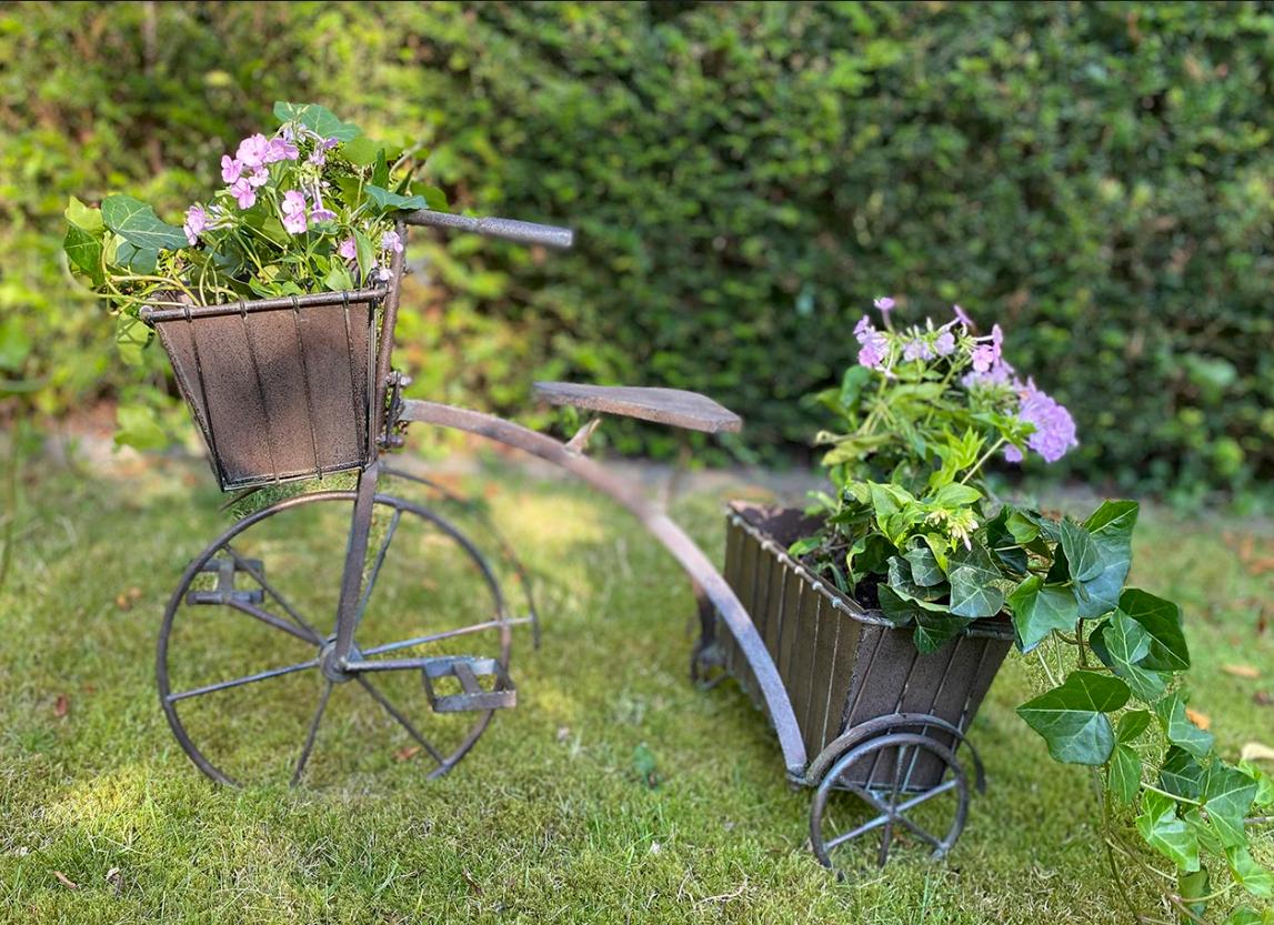 Cykel til planter
